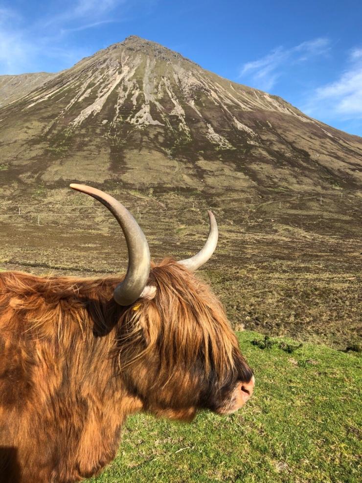Highland Caw en Skye